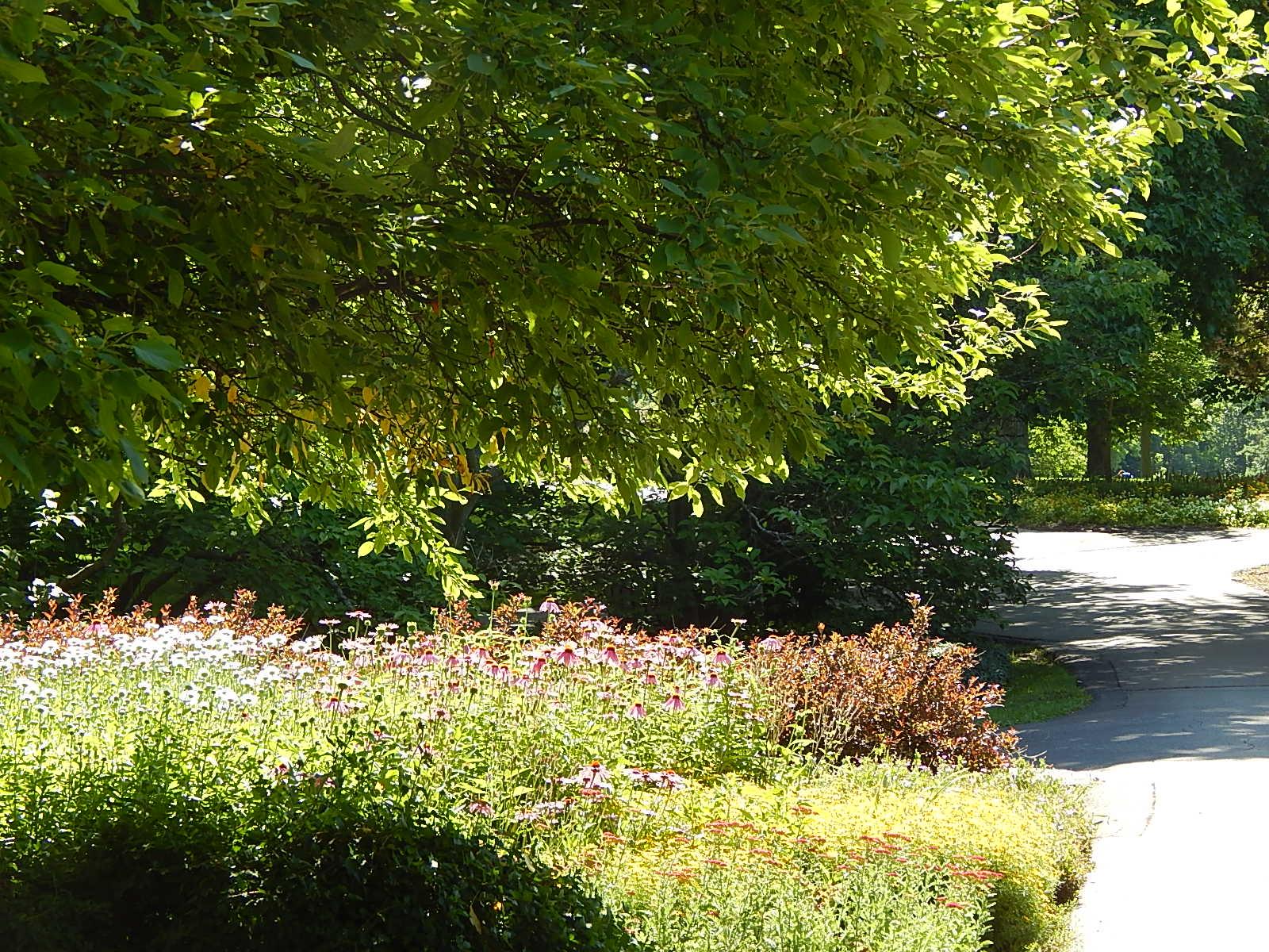 garden path Cantigny