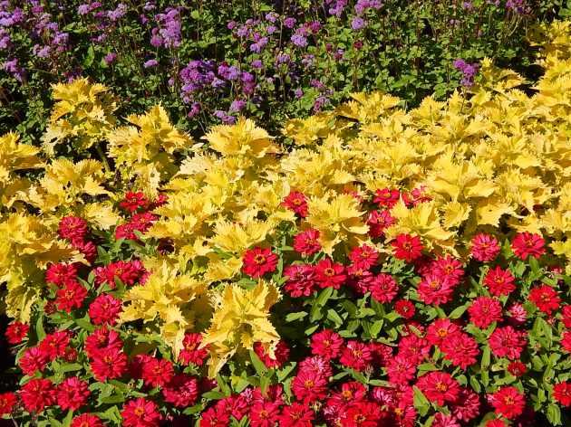 flowers Cantigny
