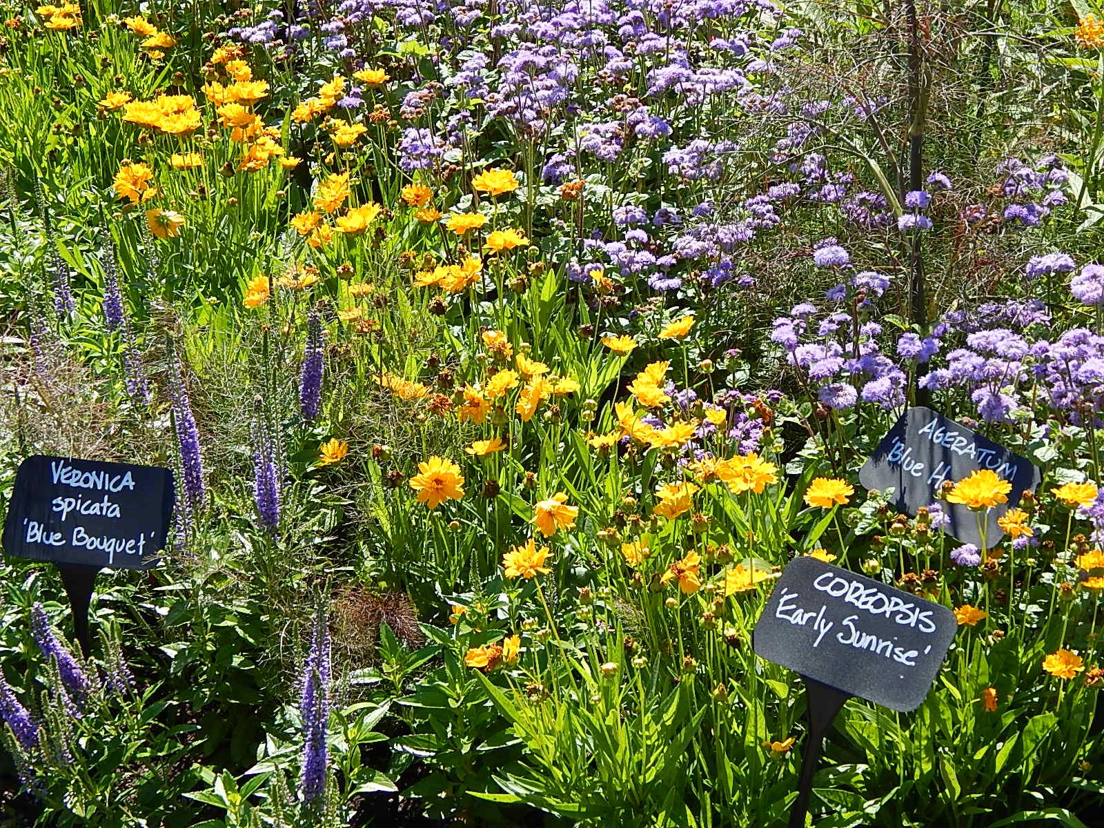 Idea garden 1