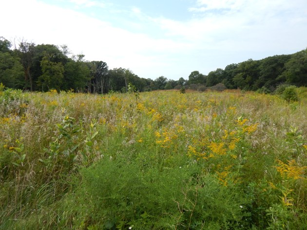 Open prairie meadow