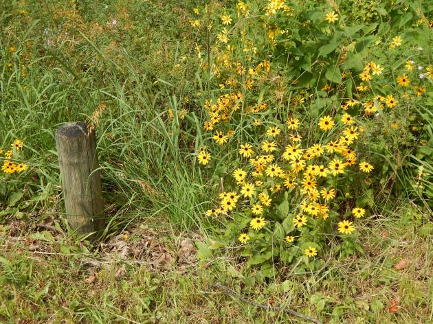 Meadow flora
