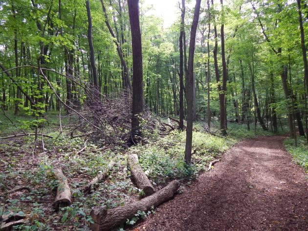 Woodland Interior #2