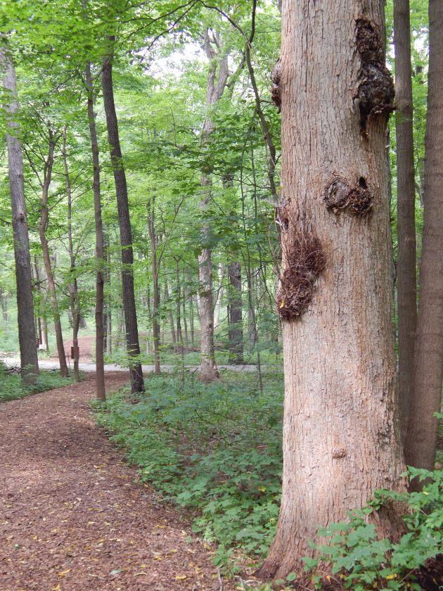 Avant garde tree