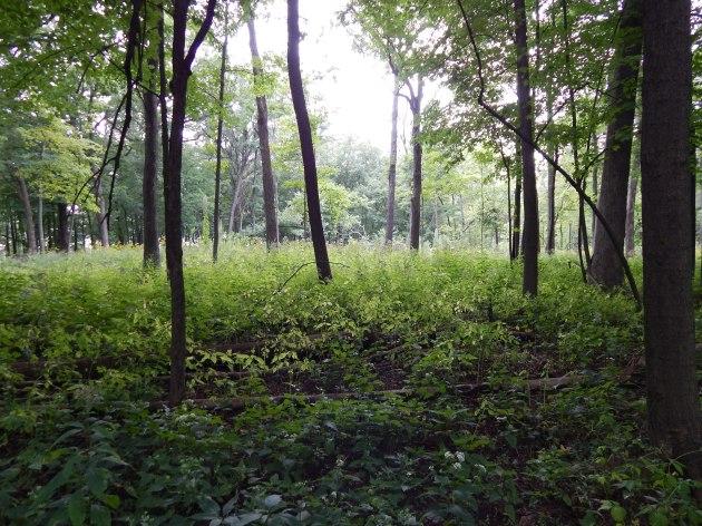 Forest glen 32