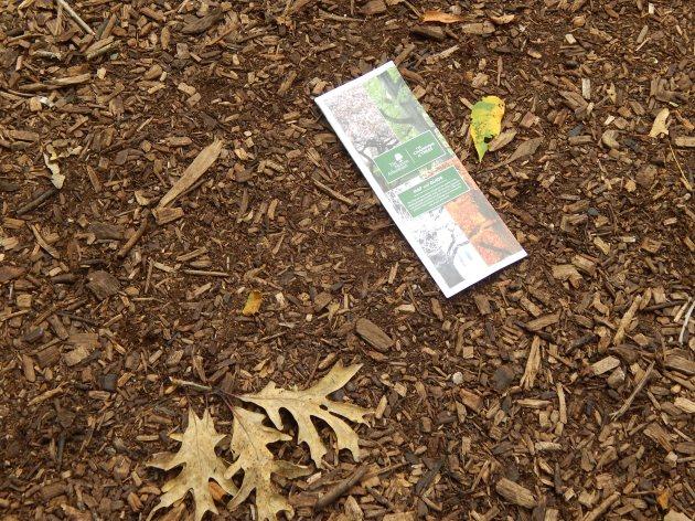 Morton Arboretum brochure