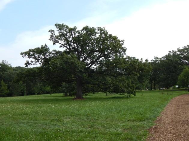 Morton Arboretum 9-5-2015 SP29