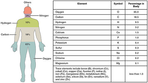 Elements_of_the_Human_Body-01